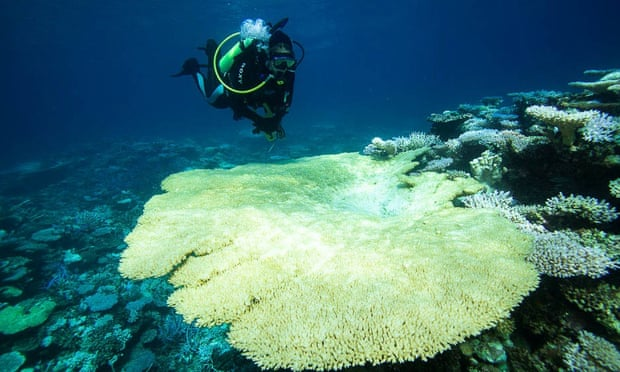 Does anyone have any good information on Coral Bleaching and how we can (possibly) solve it?