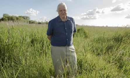 David Attenborough: no other broadcaster could or would have created his back catalogue