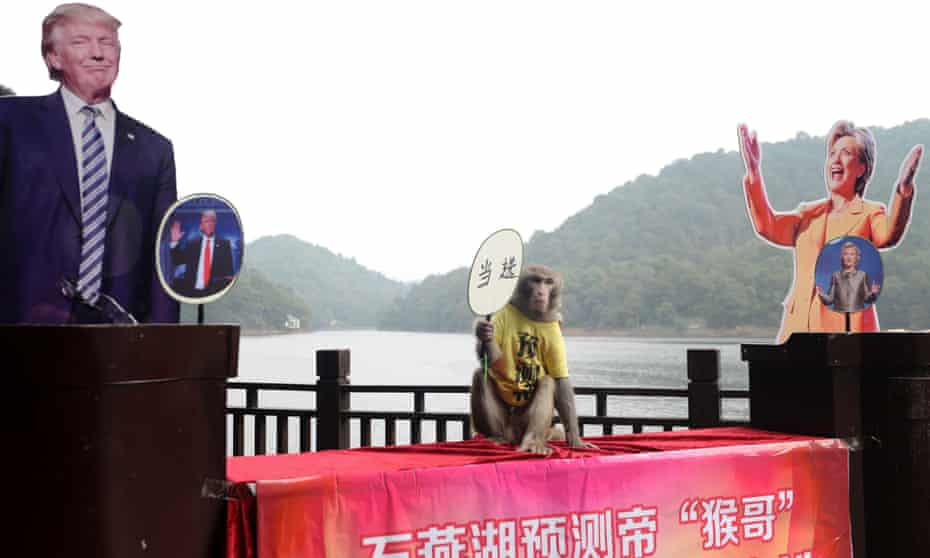 """A monkey holding a fan with Chinese characters that read """"elected"""" as it sits between cardboard cutouts of US presidential candidates Donald Trump and Hillary Clinton before making a selection intended to predict the result of the US election, at a park in Changsha in China's Hunan province."""