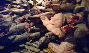 This handout picture released on August 14, 2017 by the Environment Ministry of Ecuador shows frozen fish in a Chinese ship confiscated by the Navy in the waters of the Galapagos marine reserve.