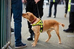 Drug detecting dog with police officer