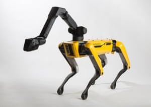 Dog lead: the canine-inspired SpotMini.