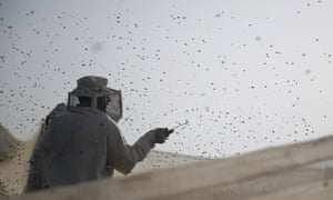A Palestinian beekeeper is surrounded by bees as he harvests honey in east Khan Younis, Gaza Strip