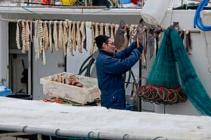Drying cod in the harbour in Ilulissat