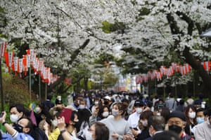 Visitors walk under cherry blossoms in Tokyo