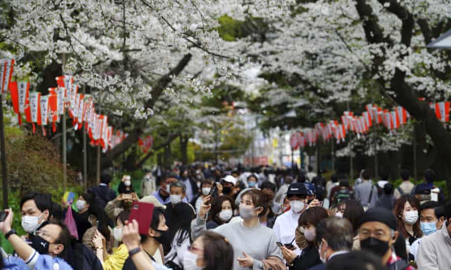 Crowds of people enjoy the cherry blossom in Tokyo.