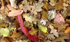 Fallen leaves in autumn.