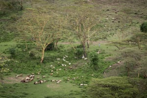 A herder watches his flock of animals just outside the perimeter of Nairobi national park.