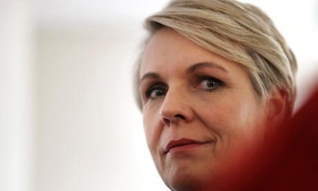 Tanya Plibersek will not contest Labor leadership ballot – as it happened