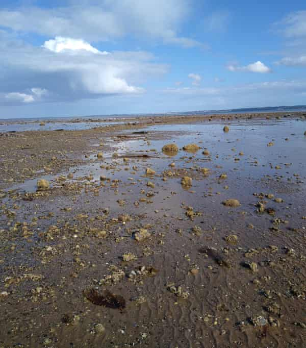 Belfast Lough. Oysters filter seawater and their shells provide a habitat for many other sea creatures.