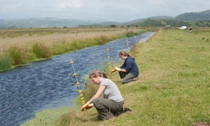 Volunteers at work on the RSPB's Ynys-hir nature reserve, Powys.