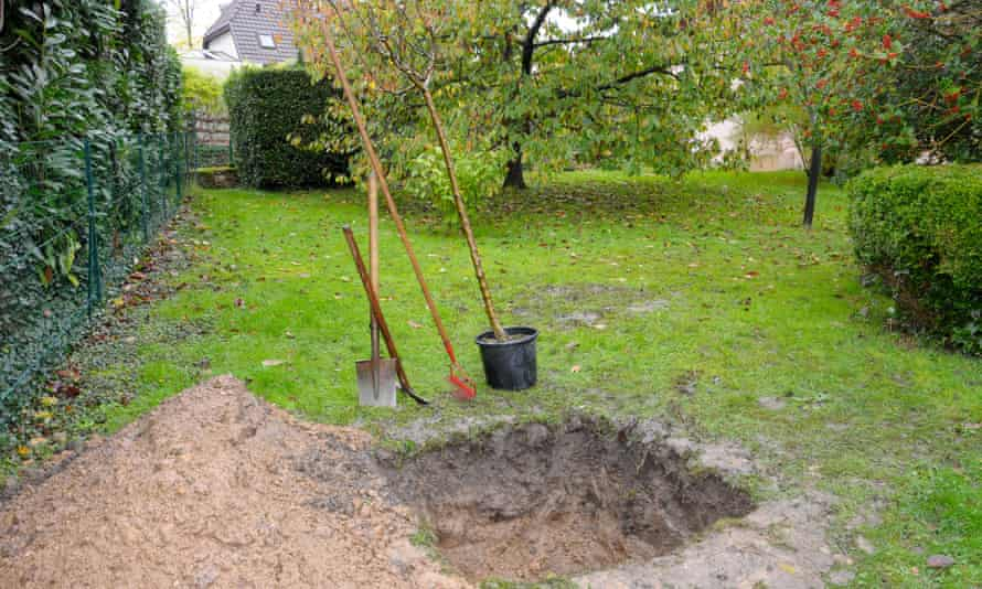 'Aftercare is absolutely vital for young and newly planted trees.'