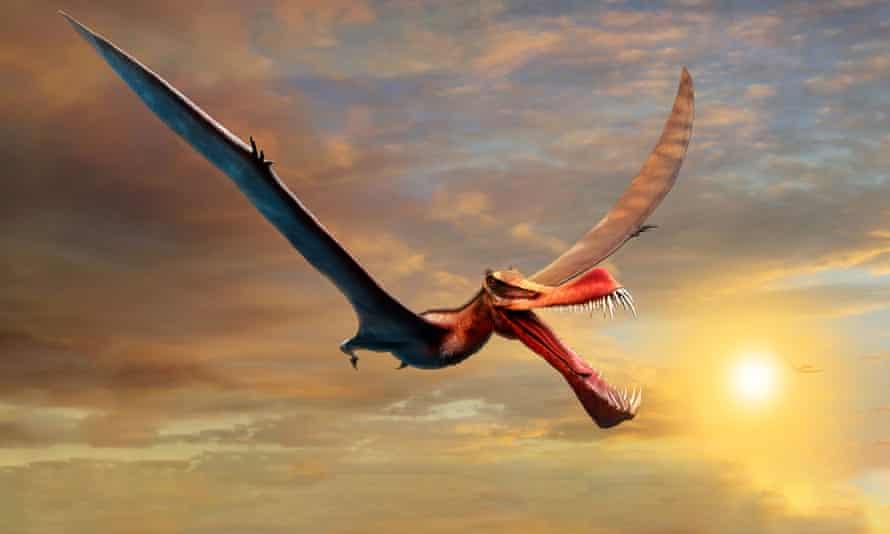An artist's impression of a pterosaur