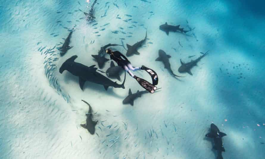 Critics of the shark ban say the animals already have enough protections, but Ocean Ramsey says they're crucial to Hawaii's marine ecosystem.
