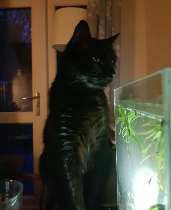 Dustin, Jules Howard's cat.