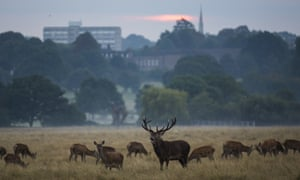 Deer at sunrise in Richmond Park