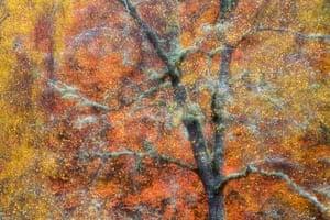 Wild woods winner (2014): Autumn Jewels by Peter Cairns, Loch Insh, Cairngorms National Park
