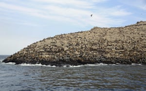 Sea lions rest on Palomino Islands, near the port of Callao in Peru. The country's Organization for Research and Conservation of Aquatic Animals (ORCA) released nine orphaned sea lions, nursed back to health, into the ocean waters