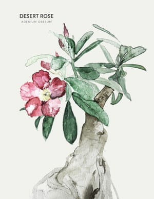 A DESERT ROSE from the book Urban Botanics by Emma Sibley and illustrated by Maaike Koster.
