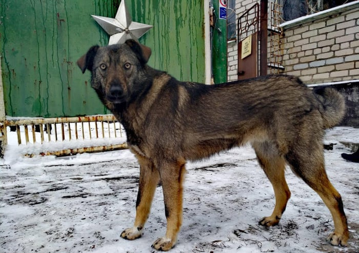 Meet the dogs of Chernobyl – the abandoned pets that formed