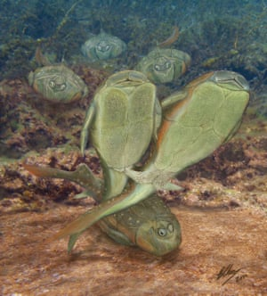 Artist's impression of the armoured fossil fish, Microbrachius dicki, mating. Based on fossil evidence from Scotland.