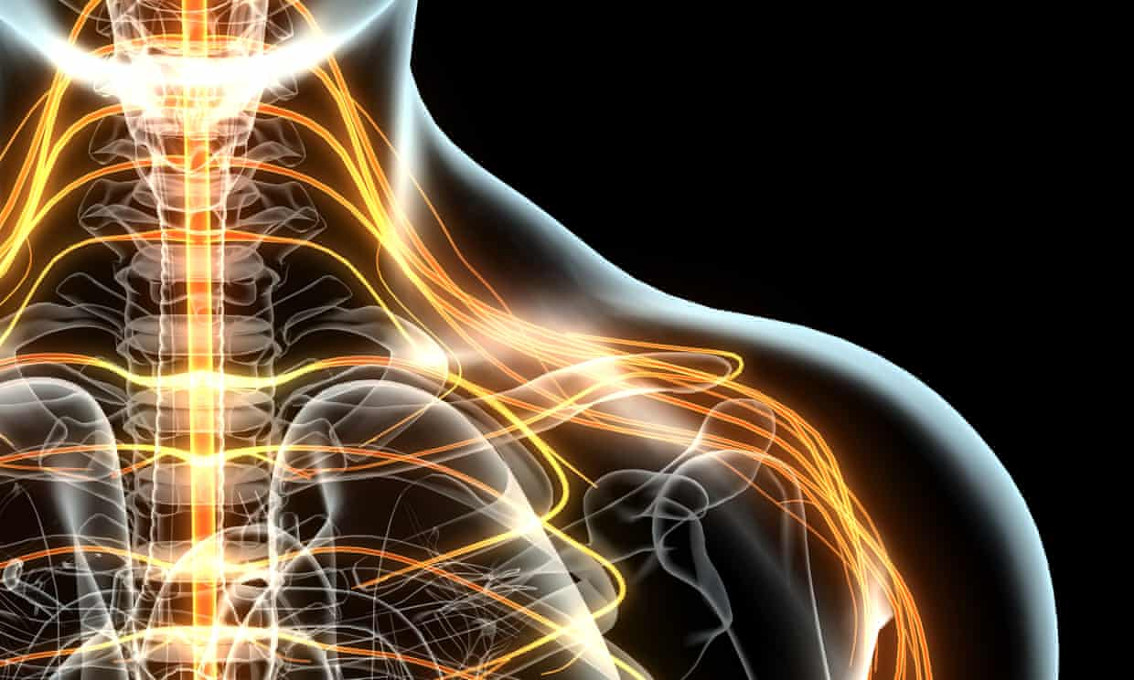 Nerve implants restore some 'consciousness' to coma victims