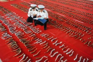 Customs officers check smuggled antelope horns in Harbin in China's northeastern Heilongjiang province.