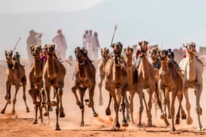 South Sinai, Egypt: Camels run on a dirt track during a race in the South Sinai desert after a more than six month hiatus due to the coronavirus outbreak