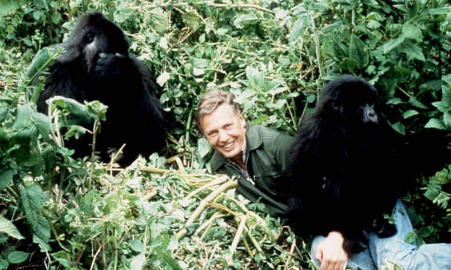 David Attenborough with mountain gorillas in Rwanda, from his 1978 series Life on Earth