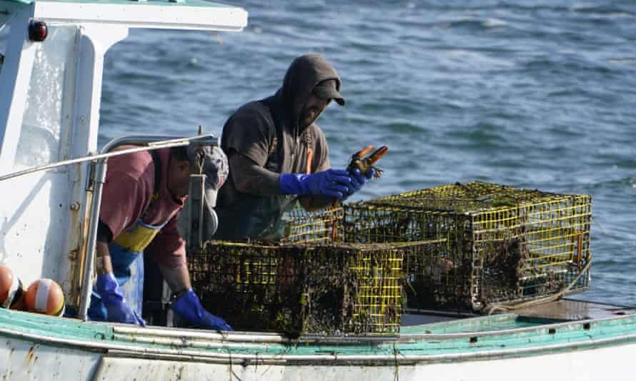 A sternman, right, checks a lobster while fishing, off South Portland, Maine, in September.
