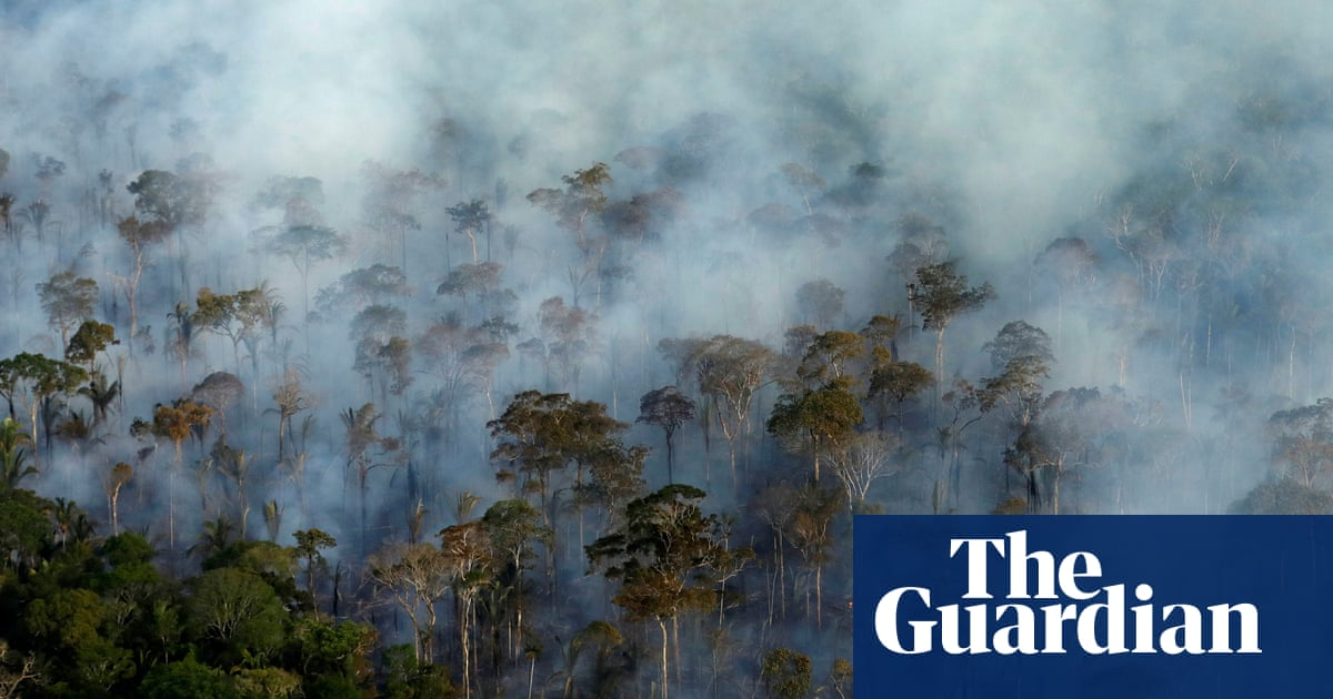 Climate emissions from tropical forest damage 'underestimated by a factor of six'