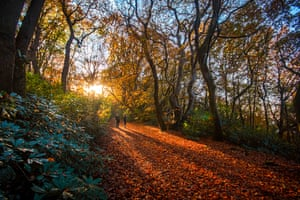 The Bois du Breuil is a protected forest near Honfleur in Normandy in autumn with long shadows thrown by the two women over the red leaf carpet.