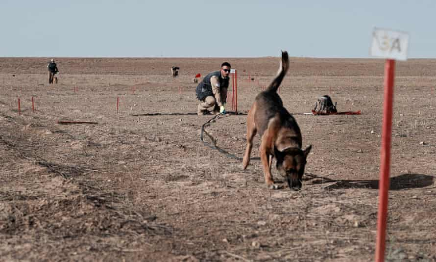 Dog and handler between two stakes on arid ground