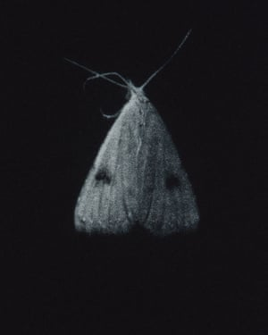 Straw Dot moth mezzotint by printmaker and artist Sarah Gillespie