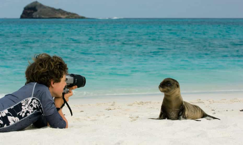 A Galapagos sea lions (Zalophus wollebaeki) being photographed by a tourist, Galapagos Islands, Ecuador.