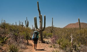 Arizona Trail winding through cactuses in Colossal Cave park, Arizona