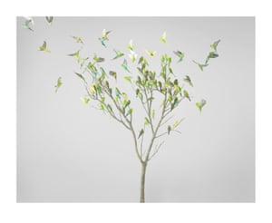 Gum Leaves. Photograph on archival fibre-based cotton rag paper, 2019 (dimensions variable).