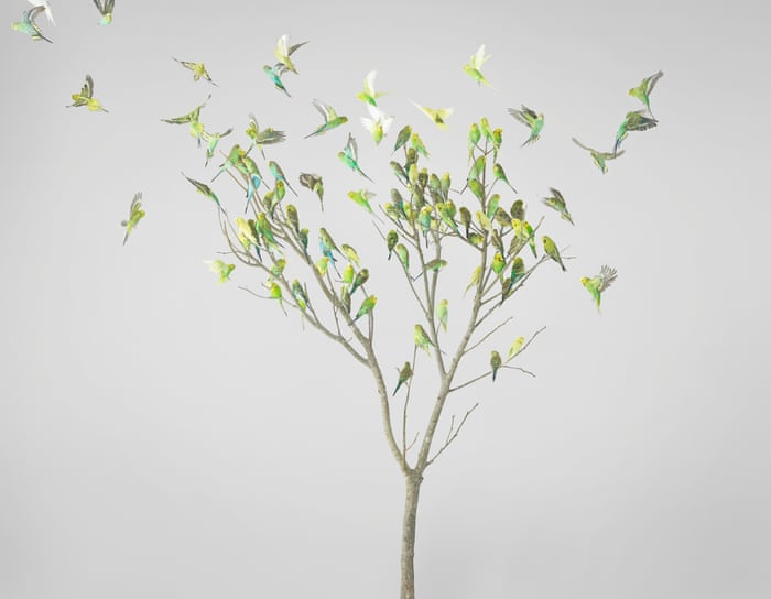 Birds Of A Green And Yellow Feather Flock Together In Artistic