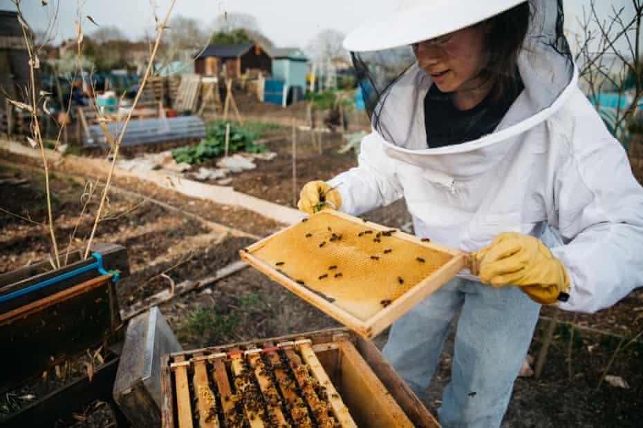 Checking an urban bee hive