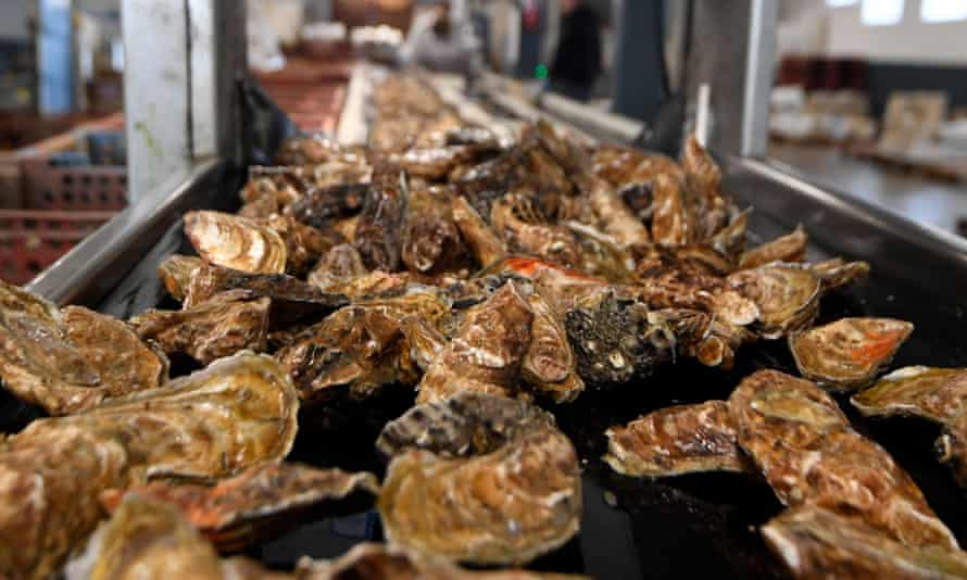 Oysters lie on a sorting belt in a factory in Cancale, France