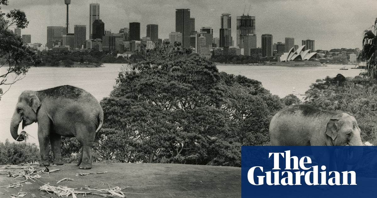 100 Years Of Sydneys Taronga Zoo In Pictures World News The