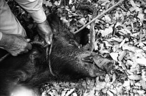 Texas 1961Texas and Mexico. Roping wild boar. In an attempt to reconnect with the USA, I went to Texas to try my hand at doing adventure stories with American roots. Through a Texas contact I met in Norway, I met some colorful characters who did relatively insane things like roping wild boar. This story proved to be so sublimely idiotic that even the adventure magazines weren't interested.