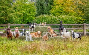 Animals including dogs and goats pose around hay bales
