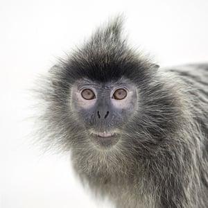 Monkeys at Chimelong Safari Park in Guangzhou