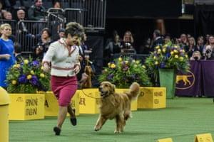 Golden retriever 'Daniel' wins the sporting group