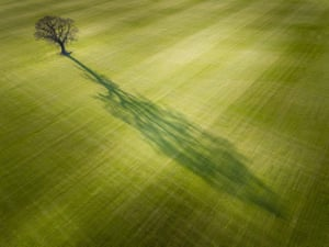 David Hopley: Cast  Everingham, east Yorkshire, England  There are several fields near home, which are used for growing grass on a massive scale. I spotted the potential in this composition while returning home from a previous photographic outing. The sun was low in the sky, which created a long shadow from the lone tree. I originally envisaged a composition with the tree in the foreground and the shadow stretching out into the distance. The drone I used gave me the freedom to try different viewpoints but I thought this composition worked very well indeed. Your view, adult class, highly commended