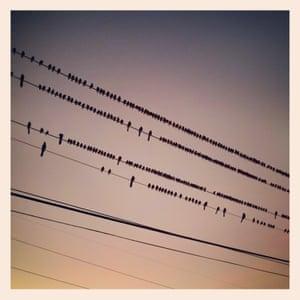 Birds on a wire. Early morning in Irving Texas