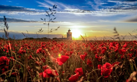 Poppies atop the white cliffs of Dover
