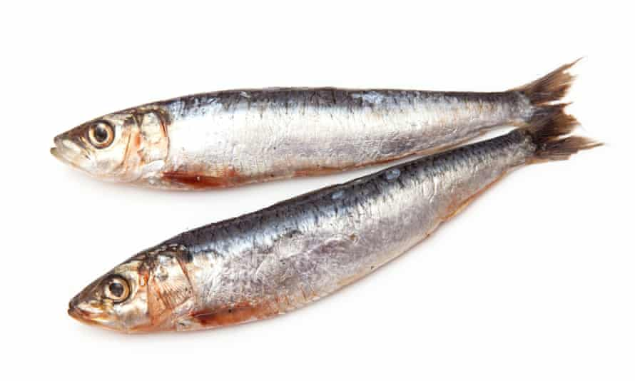 Sardines: if you must eat fish, a more sustainable option than tuna.