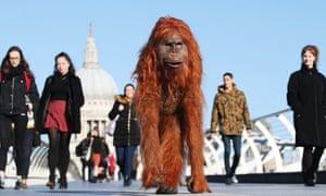 Orangutan: 'Bloody hell. Boris has dyed his hair'